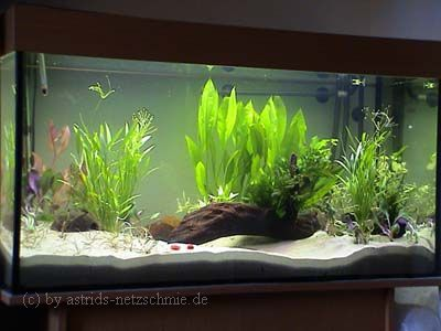 200 l aquarium pictures. Black Bedroom Furniture Sets. Home Design Ideas